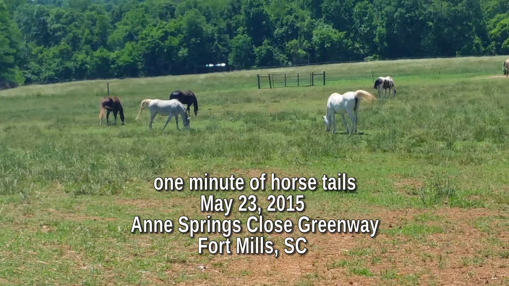 One minute of horse tails